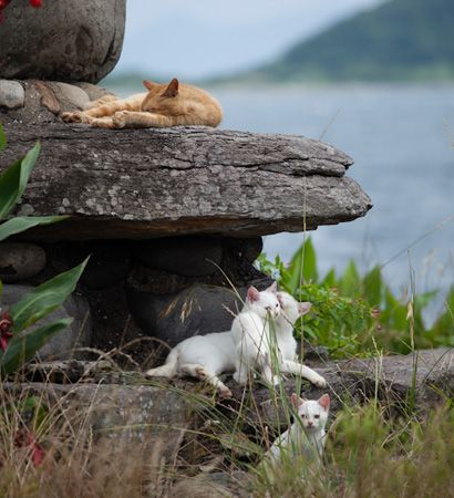 Tashiro-jima, better known as Cat Island, is a small island off the coast of Japan that is home to more cats than people!