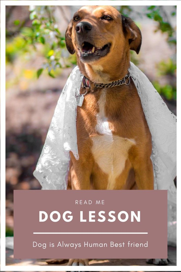 Dog Training Simple Dog Training Tips For Any Dog Lover You
