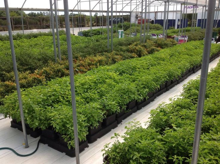 great greenhouse set up for growing herbs -source- AutoPot