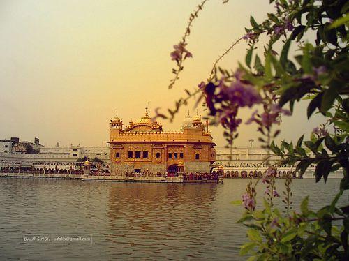 Golden Temple #SriDarbarSahib #Amritsar