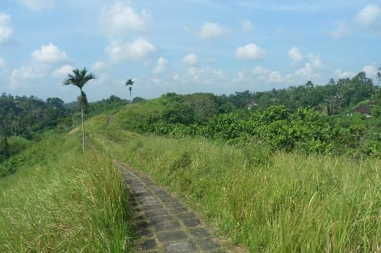 Looking at the path as it continues back to Ubud.