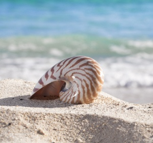 how to get the smell out of seashells