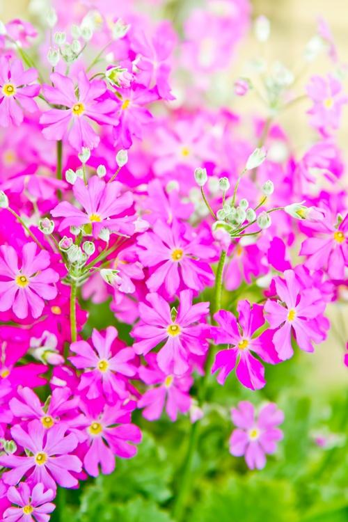 小ぶりなピンクのお花