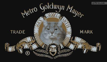 Miaou... - Photos Humour