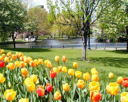 Boston Public Garden, springtime