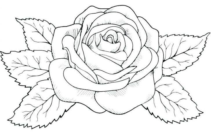 rosen ausmalbilder  kinder für malvorlagen  rose tattoos