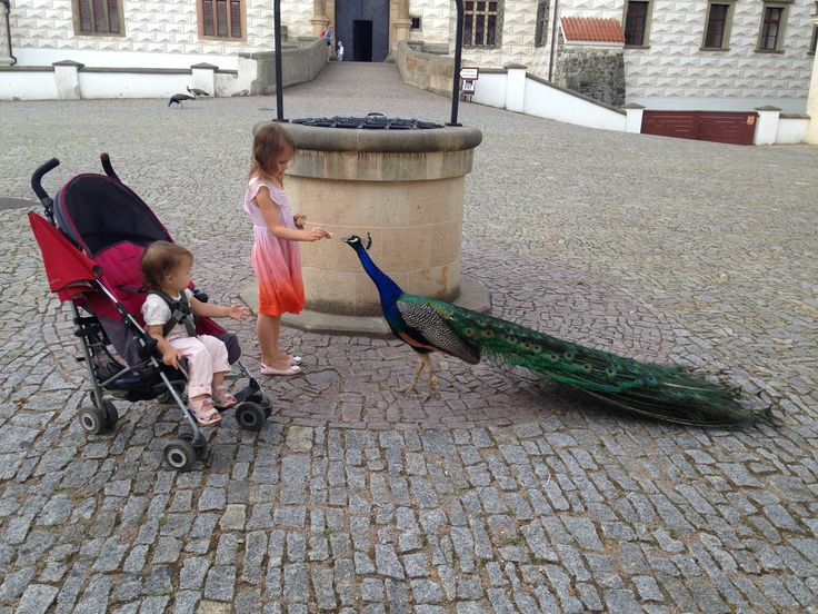 Our TinyExpats just love feeding the peacocks in the local castle.