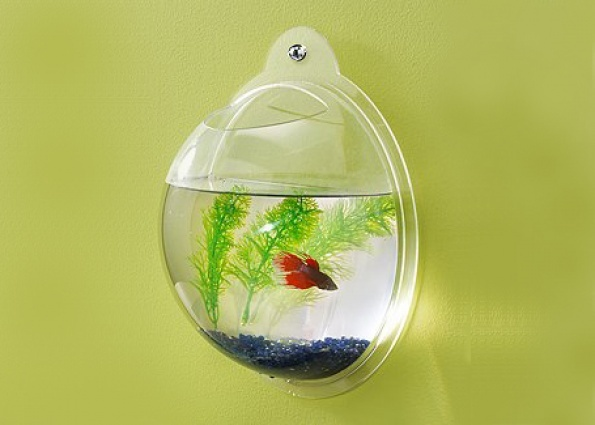 11 best fish bowls for norman images on pinterest fish for Best fish for bowl