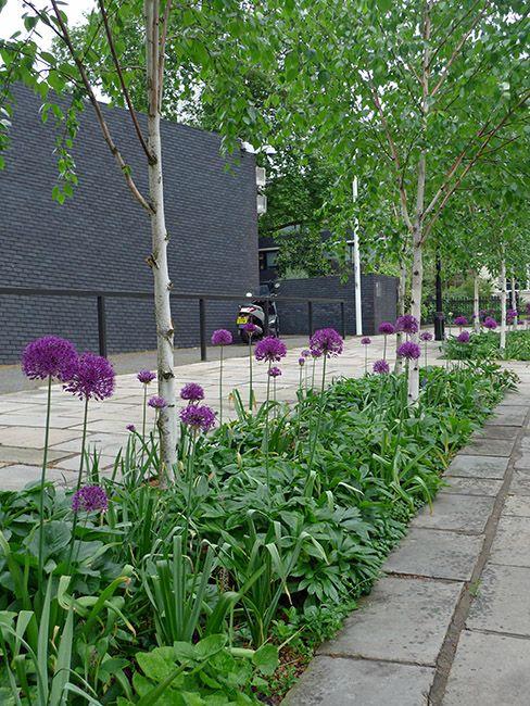 Regents Park, silver birch, hellebores, alliums