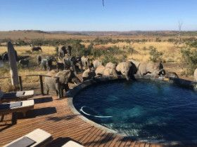Intimate wedding venue for up to 20 guests in a Big 5 Game Reserve - http://www.weddingflair.co.za/item/nambiti-plains-private-game-lodge/