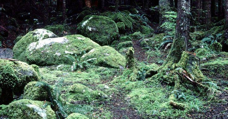 Uma lista de animais que vivem no solo da floresta tropical. As florestas tropicais são ecossistemas complexos encontrados em áreas tropicais ou temperadas que têm grande incidência de chuvas. De acordo com o site rainforestanimals.net, as florestas tropicais cobrem de 6 a 7% da superfície da Terra, mas contêm mais de 50% das espécies de plantas e animais. Uma vasta gama de criaturas vive no chão úmido e de ...