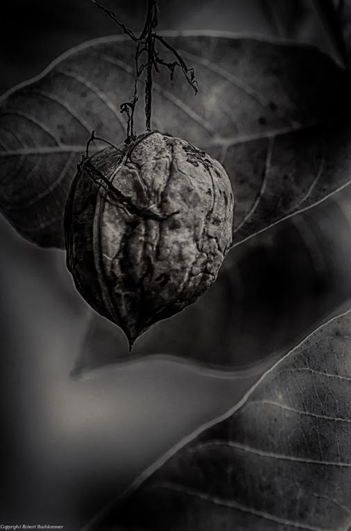 manchmal sind es kleinigkeiten © Robert Buchkremer   Google+