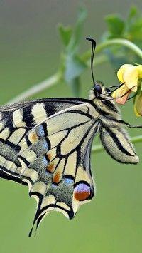 Motyl trzymający się kwiatka