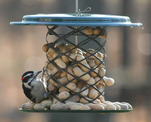 Best 25 wild birds ideas on pinterest pretty birds for Whole coconut bird feeders
