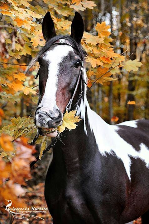 1000  ideas about horse crafts on pinterest