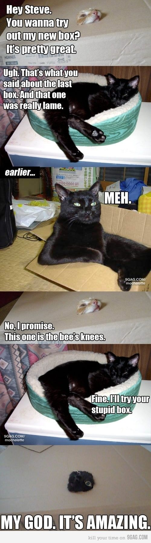 HAHAHA! my cat acts like boxes are lame, until he's alone.: Animals, Giggle, Funny Cats, Boxes, Funny Stuff, Funnies