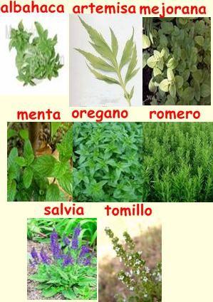 Plantas Curativas Qué Puedes Sembrar En Casa