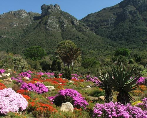 Kirstenbosch Gardens, Cape Town, South Africa