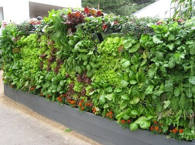 Vertical Garden with herbs and veggies- 3 Mobiwall basic units