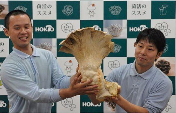 Le plus grand champignon comestible du monde - http://www.2tout2rien.fr/le-plus-grand-champignon-comestible-du-monde/