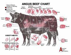 Beef Cut Chart / Plano de cortes de ternera