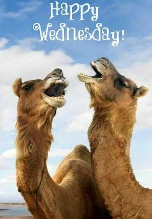 This is appropriate for today.  For the last 2 Wednesday I will say on the way to school its hump day and we talk about the camels.  She will appreciate this when I pick her up this afternoon.  #humpday #wednesday #fitness #nutrition #fitmommy