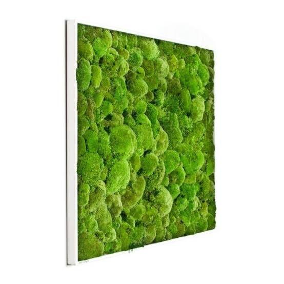 die besten 17 bilder zu ohne moos nix los mooswand oder bild als deko auf pinterest. Black Bedroom Furniture Sets. Home Design Ideas