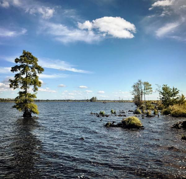 Lake Drummond inside the Great Dismal Swamp