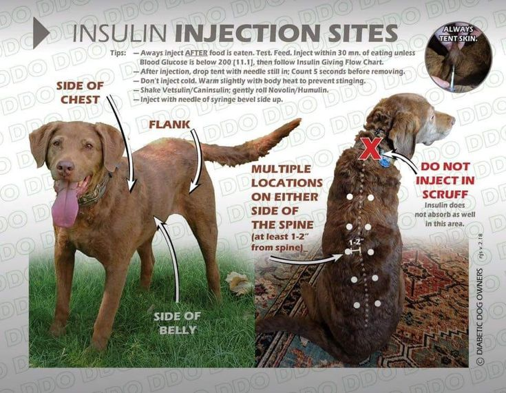 Insulin injection sites for dogs created by the diabetic