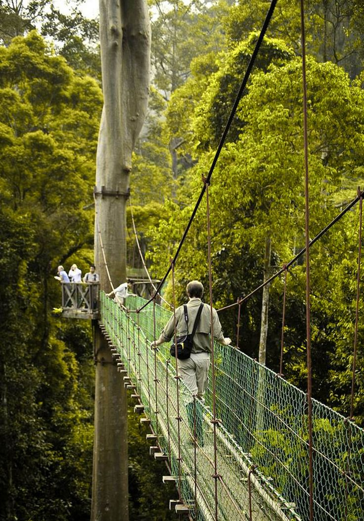 Rainforest Walkway Borneo Travel