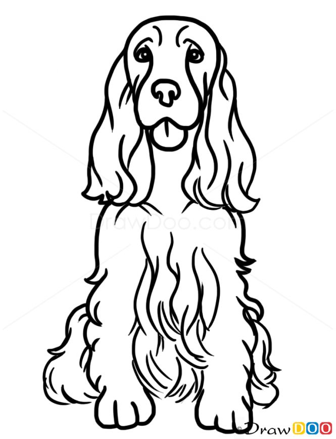 Line Drawing Dog Face : Best dog art cocker spaniel images on pinterest