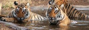 Manas National Park – Wildlife Tourism