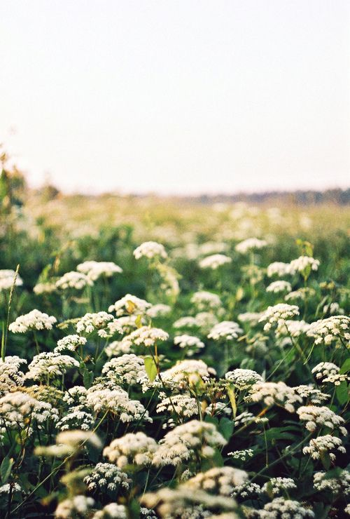 """""""Spring grew into summer, and the rhythm of my life now included Nell. I learned that her secret thyme and mint beds were deep in the woods, out by the chuckling stream that disappeared underground. She gathered plants she needed every day, and she was as a child who gathers flowers in May."""" -- from the novel SINFUL FOLK"""