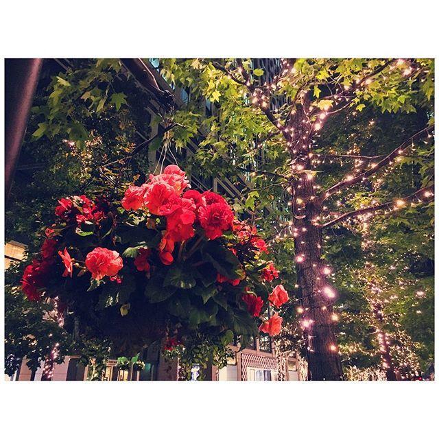 Instagram【yuka_tamo】さんの写真をピンしています。 《丸の内仲通りがライトアップされていました!!✨ お花とシャンパンゴールドのライトが上品で好き❤️ ですが、こないだ見たばかりな気がする。。 月日が過ぎるのは早いですね。 10月の終わる早さといったら!! #イルミネーション #ライトアップ #丸の内仲通り #綺麗 #花 #ハンギングバスケット #夜景 #風景 #オシャレ #illumination #lights #lightning #night #nightview #beautiful #flower #flowerlover #tokyocameraclub #igersjp #phos_japan #team_jp_ #trees #instalike #instadaily》