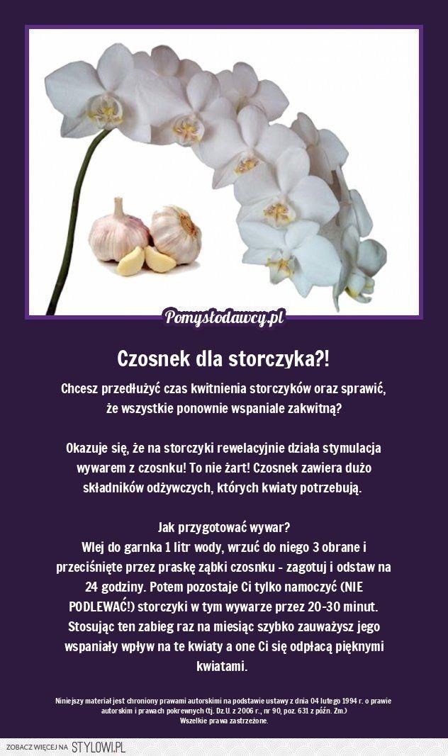 Chryzantemy W Bukietach Na Wszystkich Swietych Jak Przedluzyc Trwalosc Cietych Chryzantem Murator Pl Plants