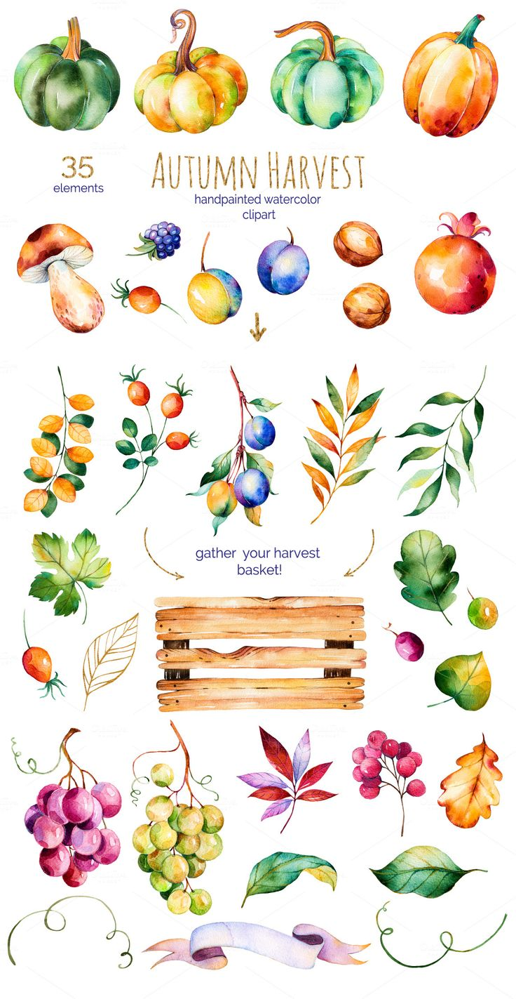 Autumn Harvest Illustrations 2 Thanksgiving ⊱cards