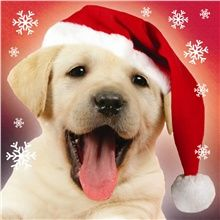 99 Best Charity Christmas Cards Images On Pinterest