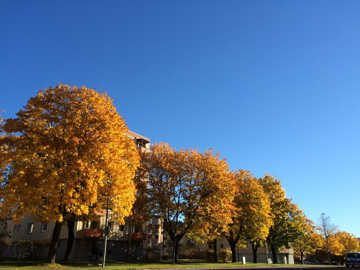 I just loved the contrast sky + fall trees!