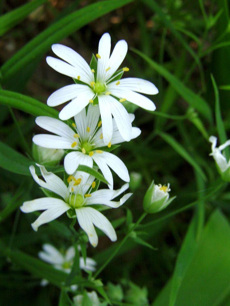 ...kwiaty