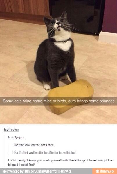 I really would like that kinda cat. An animal just as weird as I am