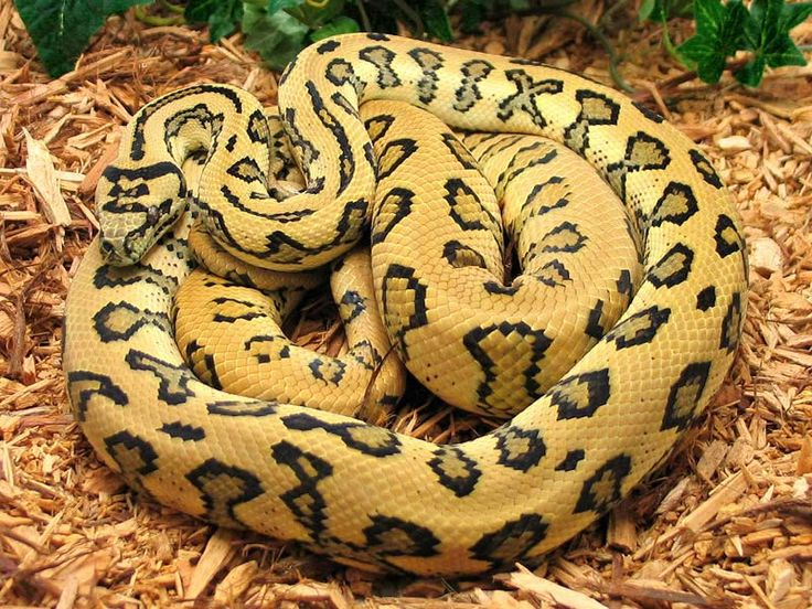 21 Cool Pictures Of Snakes