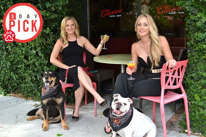 Miller and Waag are the founders and coordinators of the #SRQYappyHour, a free event that brings local dog owners and pooches out for an evening of socializing for both humans and pups. The pair hosted their first Yappy Hour in May 2015 at Clasico Restaurant in downtown Sarasota.