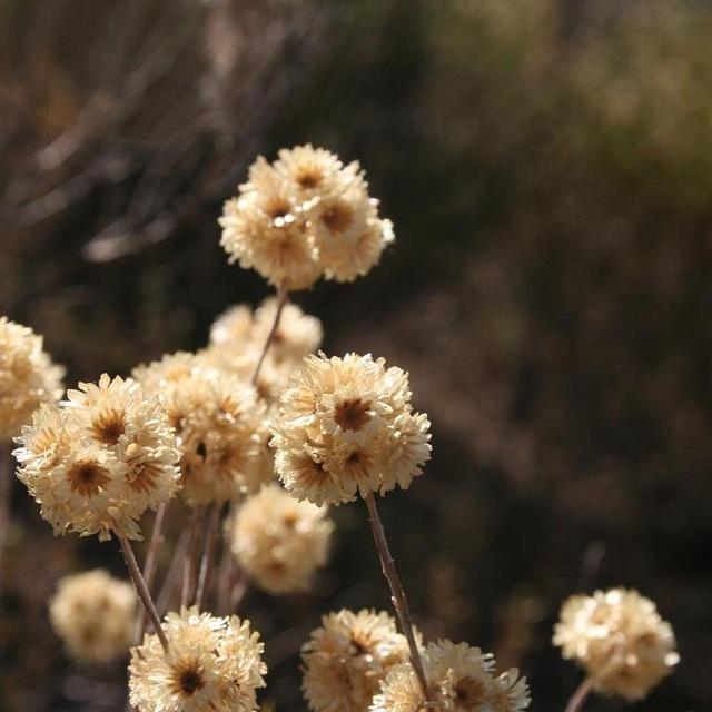 31 best Flores secas images on Pinterest Floral arrangements - flores secas