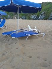 The turtle laid its nest under two sunbeds   | check it out at wildlifesense.com