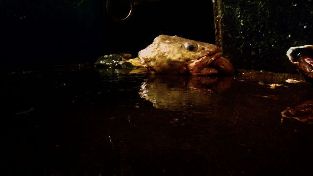 "LUCIEN CASTAING-TAYLOR AND VÉRÉNA PARAVEL, Still from ""Leviathan"" Captura de un video (DCP, color , sonido, 87 minutos)"