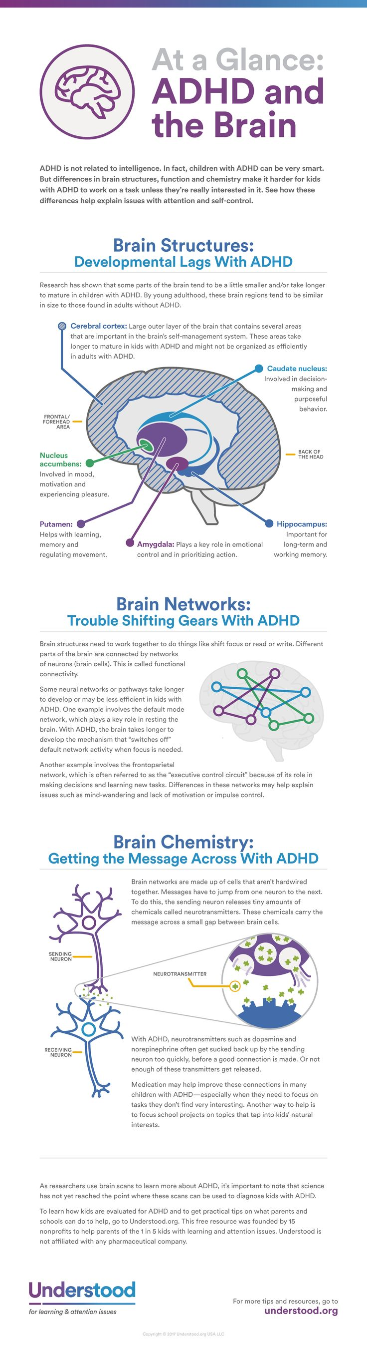 Researchers are learning more and more about how differences in brain development and brain function are involved in ADHD (also known as ADD). This graphic can help you understand how your child's brain works—and why ADHD isn't simply a matter of willpower.