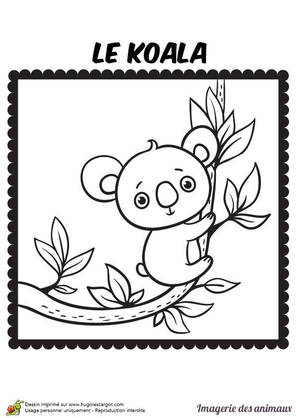 Coloriage imagerie des animaux, le koala - Hugolescargot.com