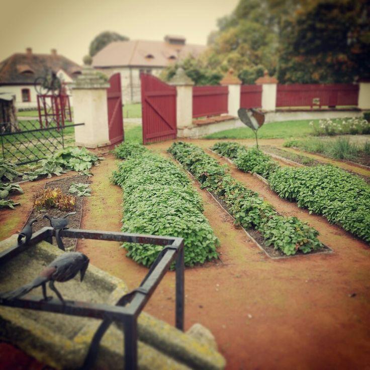 Pořád ještě máme krásnou bylinkovou zahrádku #podzim #bylinkova zahradka #bylinky #mata #medunka #radost