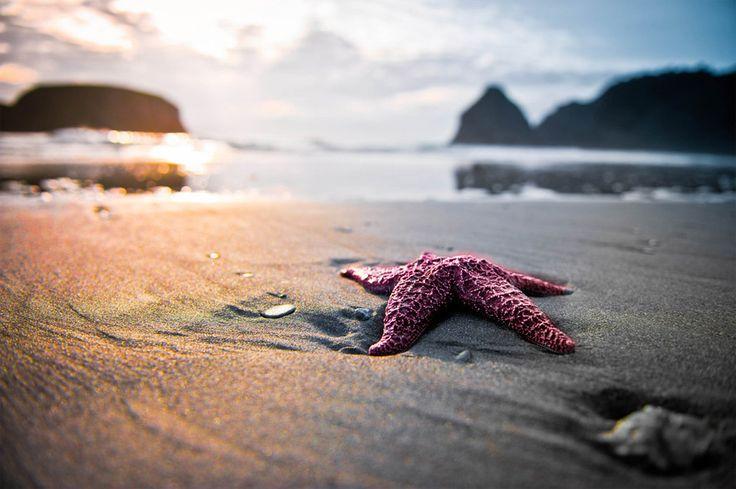 Patrick... Patrick.... Are you Ok?: Seastar, Sea Creatures, The Ocean, Starfish,  Sea Stars, Beaches Photography, Oregon Coast, Sunsets Beaches, Desktop Wallpapers
