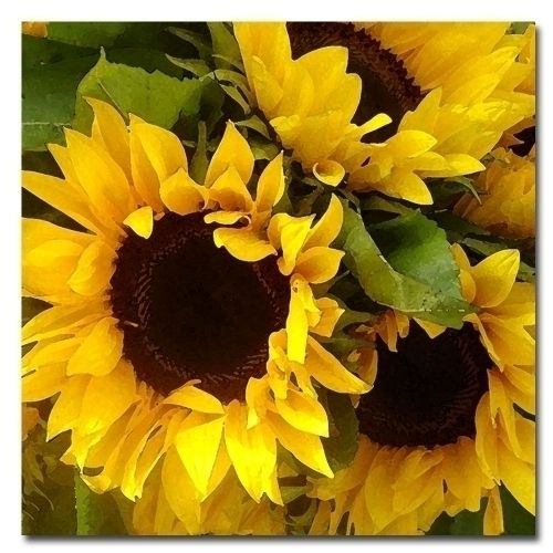 "Amy Vangsgard ""Sunflowers' Canvas Art"